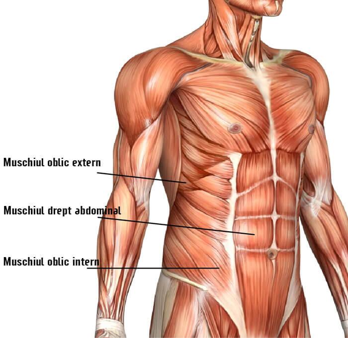 cum sa-ti antrenezi muschii abdominali