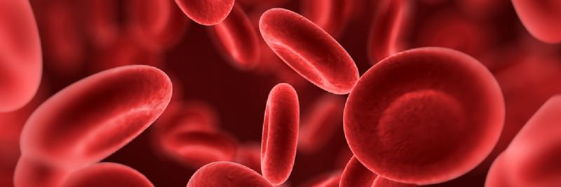 celule-rosii